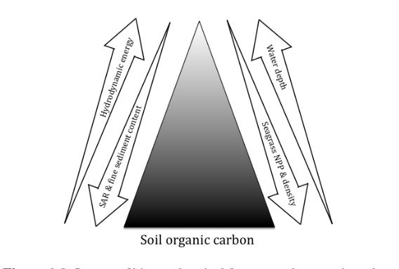 A Step Further In Understanding The Size Of The Carbon Sink Associated To Seagrasses