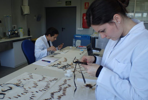 Lepidochronology At CEAB-CSIC